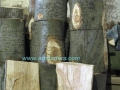 madera de álamo blanco